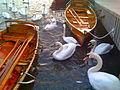 Swans at Lake Windermere.jpg