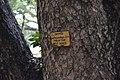 Swietenia mahagoni Signage - Serampore College - Hooghly 2017-07-06 0896.JPG