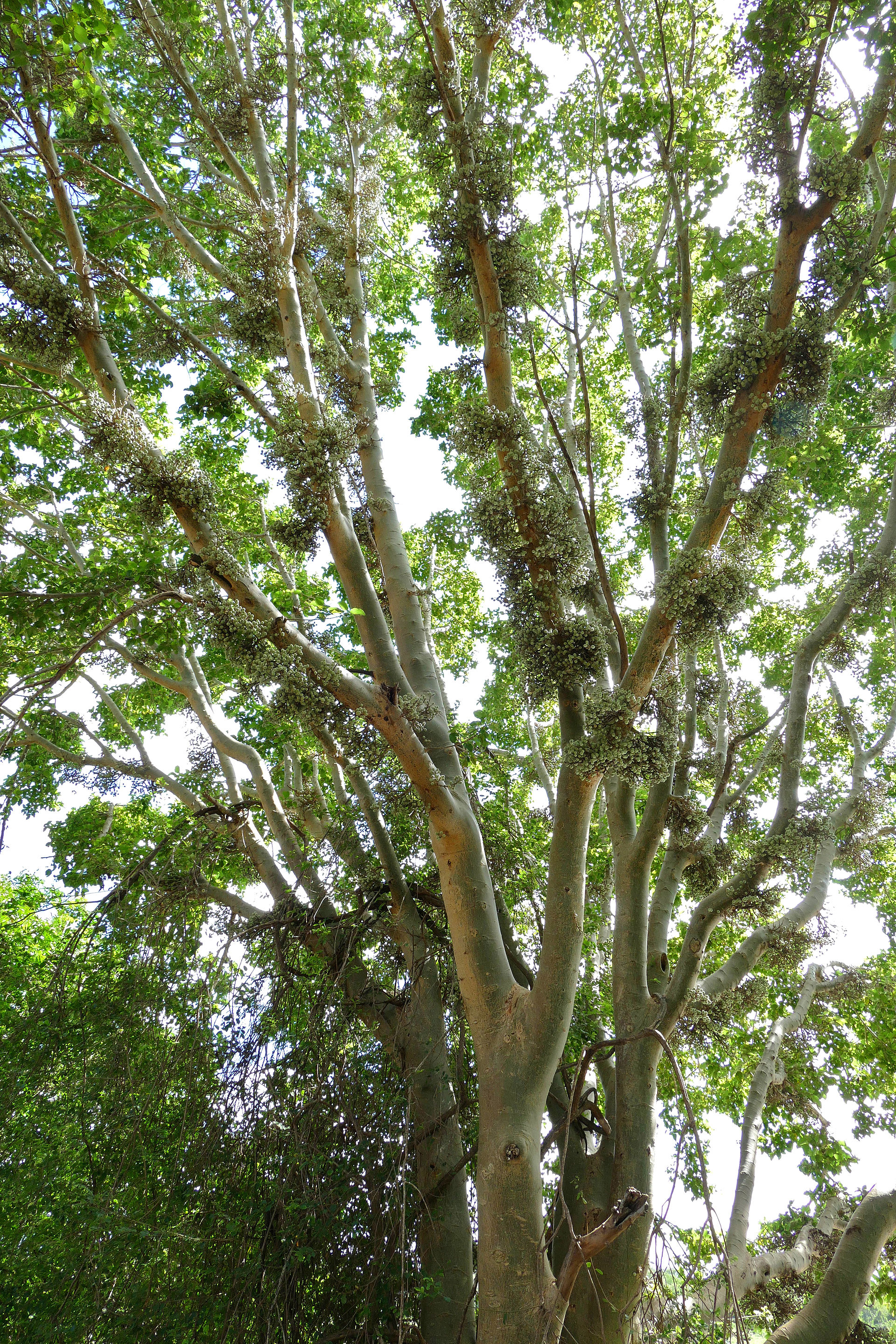 Image Result For Tree Bark With