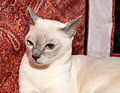 TON Beautyburm's Archi White (11463750076).jpg