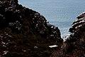 Table Mountain - panoramio (7).jpg
