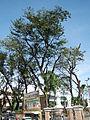 Talavera,NuevaEcijajf9520 28.JPG