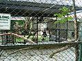 Taman Hewan Pematang Siantar (32).JPG