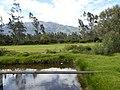 Tambo Jatarishun Cotacachi Ecuador 1081.jpg