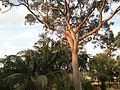 Tanilba bay backyard - panoramio.jpg
