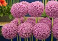 Tatton Park Flower Show 2014 031.jpg