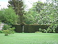 Taxus baccata, yew, as internal hedge at Down House.JPG