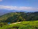 Tea Estate, Darjeeling.jpg