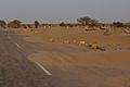 Thar Desert 03.jpg