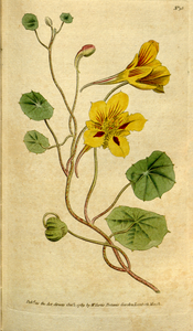 The Botanical Magazine, Plate 98 (Volume 3, 1790).png