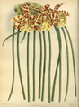 The Orchid Album-02-0024-0055.png