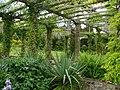 The Pergola West Dean Gardens - geograph.org.uk - 415516.jpg