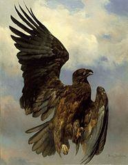 The Wounded Eagle