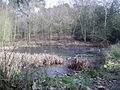 The pond at the bottom of Finchampstead Ridges - geograph.org.uk - 696176.jpg