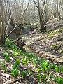 Tilden Gill - geograph.org.uk - 1742400.jpg