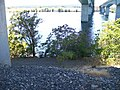 Timmerman Ferry site in Pasco, Washington 3.jpg