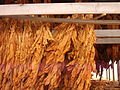 Tobacco Drying.jpg