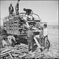 Topaz, Utah. A group of volunteer workers at the Topaz Relocation Center gathering a truck load of . . . - NARA - 538697.jpg