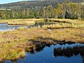 Torfowisko Chalupska Slat w Parku narodowym Szumawa.jpg