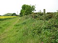 Track skirting oilseed rape field - geograph.org.uk - 1319343.jpg