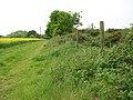 Track skirting oilseed rape field - geograph.org.uk - 1319343.jpg