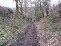 Track to Eckington Woods - geograph.org.uk - 1166896.jpg