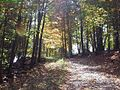 Trail-Cass - West Virginia - ForestWander.jpg