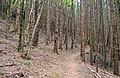 Trail in Belluno.jpg