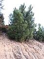 Tree213252402.jpg
