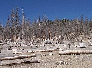Mammoth Mountain - Image: Tree Kill