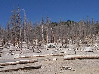 Mammoth Mountain - Carbon dioxide has killed a large area of trees