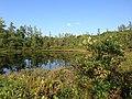 Triangle Lake Bog State Nature Preserve.jpg