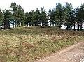 Tumulus in Seven Hills Plantation - geograph.org.uk - 1733072.jpg
