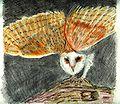 Tyto Alba crayon drawing.jpg