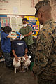U.S. Marine Corps Brig. Gen. Craig Q. Timberlake, right, the commanding general of the 3rd Marine Expeditionary Brigade, watches a tooth extraction during a dental civic action program at the Amungan Elementary 130407-M-UY788-107.jpg