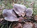Unidentified fungi in Minsk.jpg