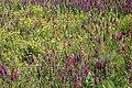 Untended Flower Field - geograph.org.uk - 819605.jpg
