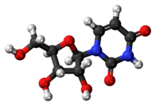 Ball-and-stick model of the uridine molecule