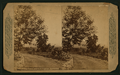 Valley Scene near Los Angeles, California, from Robert N. Dennis collection of stereoscopic views.png