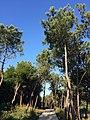 Viana do Castelo (31319586263).jpg