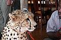 Victoria Falls 2012 05 24 1650 (7421903150).jpg