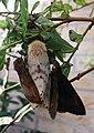 Vlinder JIHI 008.jpg