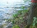 Vyžlovský rybník (024).jpg