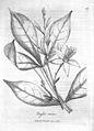 W.M. Woodville, Medical Botany, vol. 2 Wellcome L0031342.jpg