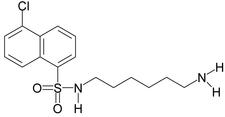 Struktur des W7