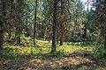 WALLOWA WHITMAN Sumac Springs Photo Point-001 (32814082251).jpg