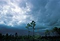 WEA glades storm 1282, NPSPhoto, Haugen, Oct 64 (9257940384).jpg