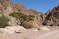 Wadi Gnai 2020-03-08-15.jpg