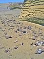 Wadi Hitan fossil whale in situ.jpg