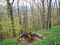 Wald - panoramio (10).jpg
